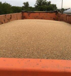 Пшеница. Продаётся пшеница