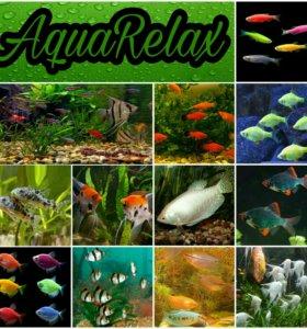 Мирные рыбки в Ваш аквариум