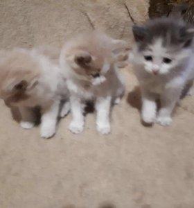 Маленькие милые котята 3 разных 2 пацана и девочка