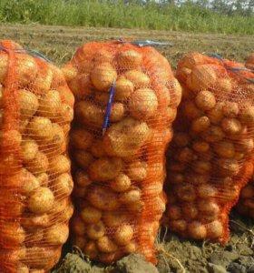 Картошка оптом 15 сеток