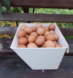 Яйцо куриное домашнее свежее