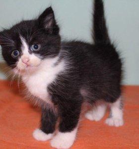 Котенок в добрые руки Мэйсон, котик в дар