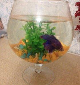 Рыбка с аквариум