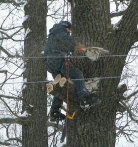 Опиловка деревьев