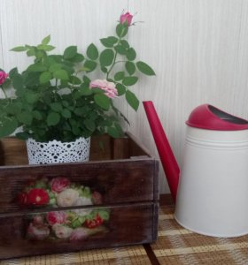 Реечный ящик для фруктов и овощей
