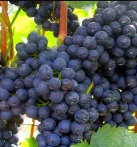 Виноград для вина...