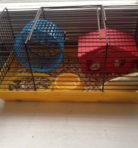 Крысята с клеткой