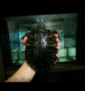 Черепаха с аквариумам