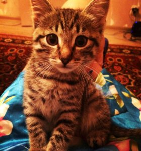 Отдам котика в добрые руки!