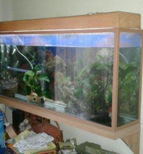 Аквариум130л с рыбками