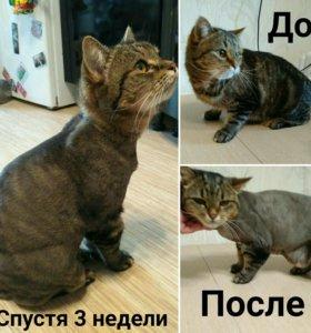 Стрижка кошек (груминг)