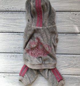 Одежда для собак на мальчика