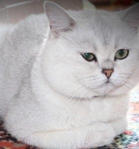 Котик для встреч