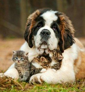 Приют передержка животных