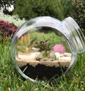 Флорариум (композиция из живых растений)