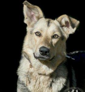 Суперласковая годовалая собака в дар