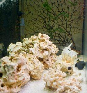 Фирменный аквариум Биодизайн