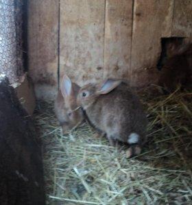 Продам кроликов от 7 месяцев.