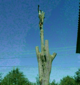 Покос травы!!!Спил ,распил деревьев!!!