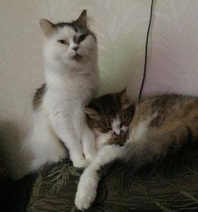 Кошки 🐱 🆘🆘🆘