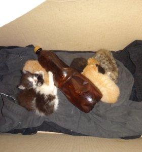 7 котят ищут хозяина