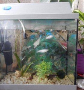 аквариум 30 литров,цвет крышки фиолетовый с фоном