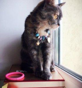 Котёнок кошечка в добрые руки отдам даром