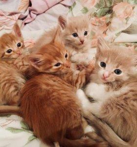 Котята в добрые руки.