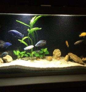 Продаётся классный аквариум