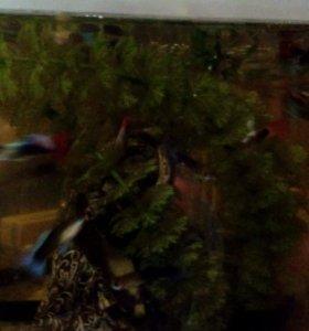 рыбки гуппи
