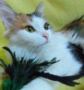Кошка Миланья в дар из частного приюта