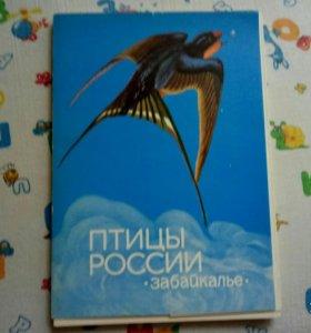 Фотокарточки СССР. Цена за все.