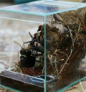 Домик для паука (новый)