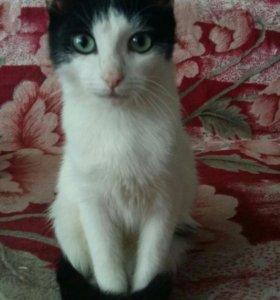 Котёнок(около полу года)