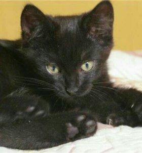 Котёнок черный.