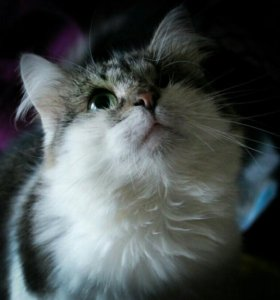 Кошка Кнопочка