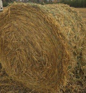 Продам солому овсяная пшеничная