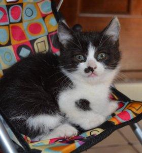 Культурные котятки-кошечки, в дар