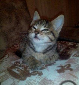 Отдам кота в ульяновске