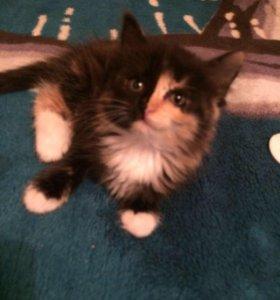 Котёнок(котята)