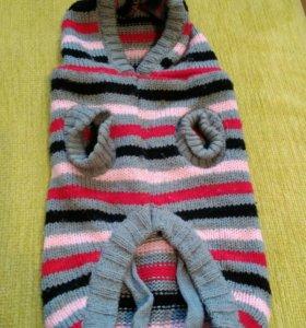 Одежда для маленькой собаки(мальчик)