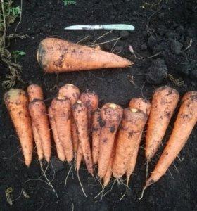 """Морковь со своего огорода в """"Рассвете"""". Доставка."""