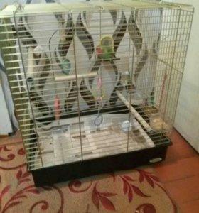 Попугай с клеткой и кормом