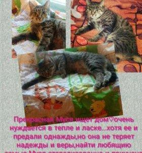 Волонтеры пристраивают кошку Мусю