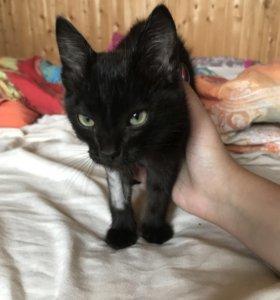 Котёнок Проша даром в заботливые руки