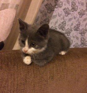 """Котёнок по имени """"Грей """""""