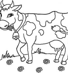 Корова- ожидается третий отёл