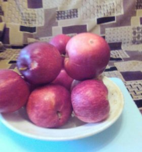 Продам большое ведро яблок