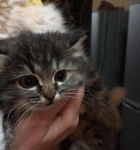 Котёнок 1,5 месяца. Девочка, осталась последняя.
