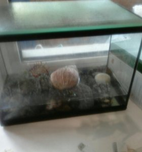 Черепаха и улитка